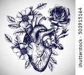 blooming anatomical human heart.... | Shutterstock .eps vector #503915164