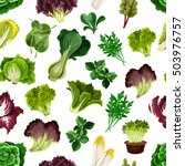 salad greens and leafy... | Shutterstock .eps vector #503976757