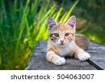 Cute Kitten Lying On A Wooden...