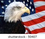 american bald eagle in front of ... | Shutterstock . vector #50407