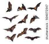 Flying Bats Isolated White Background - Fine Art prints