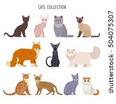 Stock vector vector collection of different cats breeds havana brown sphynx british shorthair siamese 504075307