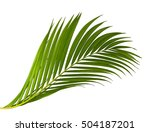 palm leaves isolated on white | Shutterstock . vector #504187201