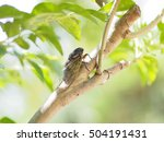 The Cicada In Summer Sunlight ...