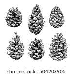 pine cone set. botanical hand... | Shutterstock . vector #504203905