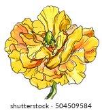 yellow anemone flower blossom.... | Shutterstock . vector #504509584