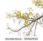 Branch Of Blossom From The...