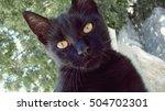 Black Kitten Looks At The...