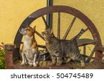conceptual image  cat and dog... | Shutterstock . vector #504745489