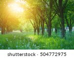 grass between the trees on a... | Shutterstock . vector #504772975