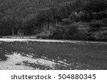 forest | Shutterstock . vector #504880345