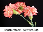 Carnation Flowers With Red On...
