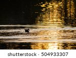 Silhouette Of Duck Swimming In...