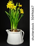 narcissus close up flower | Shutterstock . vector #50496667