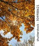 Small photo of Beautiful autumn golden oak leaves and morning blue sky/Beautiful autumn golden oak leaves and morning blue sky/Beautiful autumn golden oak leaves and morning blue sky