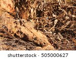 australian lizard   Shutterstock . vector #505000627