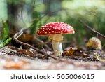 Beautiful Red Toadstool In The...