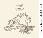 background with pomelo and... | Shutterstock .eps vector #505014571
