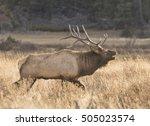 bull run   a bull elk charges a ... | Shutterstock . vector #505023574