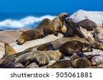 Cape Fur Seal Colony ...