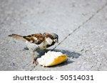 Sparrow Eating Bread    Bird...