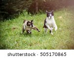 Stock photo cats playing in the grass 505170865
