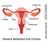 female reproductive system... | Shutterstock .eps vector #505229605