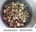 bullet mushroom | Shutterstock . vector #505276345