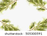 pine branches on a white... | Shutterstock . vector #505300591