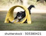 border collie running through... | Shutterstock . vector #505380421