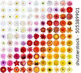 Colorful Collage Of Flowers ...