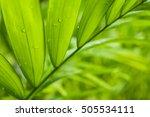 fresh green leaf backgrounds.... | Shutterstock . vector #505534111