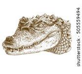 vector antique engraving... | Shutterstock .eps vector #505559494