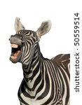 Stock photo zebra with a look of laughter isolated on white background 50559514