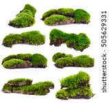 Set Green Moss Isolated On...