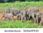 asian elephant | Shutterstock . vector #505649935