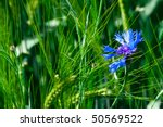 summer meadow   Shutterstock . vector #50569522