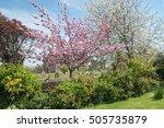 Rural Churchyard Trees In...