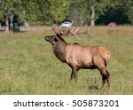 Majestic Elk And Traffic Durin...