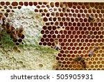 bees on honeycomb in beehive | Shutterstock . vector #505905931