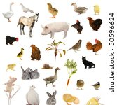 animal farms on a white... | Shutterstock . vector #50596624