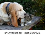 Stock photo cat and dog 505980421