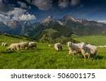 Herd Of Sheep In The Mountains...