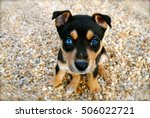 Stock photo cute puppy 506022721