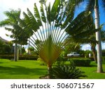 Ravenala Madagascariensis Know...
