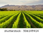 row of beautiful grape yard... | Shutterstock . vector #506149414
