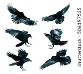 Bird   Flying Common Ravens ...