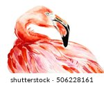 Pink Flamingo Bird Profile...