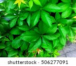 Small photo of Green plant outdoor, quickset