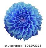 Blue Dahlia  Flower  White ...